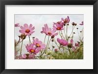 Framed Field of Pink