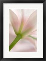 Framed Blush