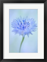 Baby Blue I Framed Print