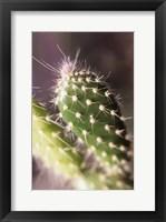 Framed Prickly
