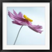 Framed Lilac Petals II