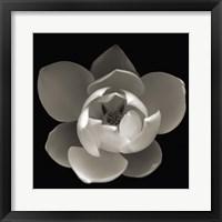 Framed White Wonder