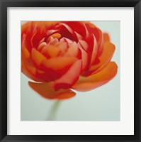Orange Delight II Framed Print