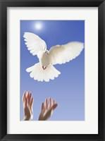 Framed Dove