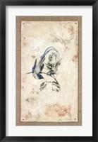 Framed Asian Paradise - Flycatcher