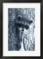 Framed Raccoon 3