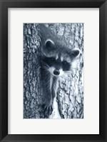 Framed Raccoon 3