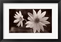 Framed Buffalo River Flower Duo