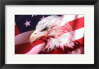 Framed American Bald Eagle II