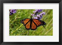 Framed Shades Of Nature Orange Butterfly