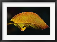 Framed Shades Of Nature Leaf