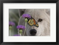 Framed Monarch and Wolf