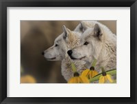 Framed Three Wolves