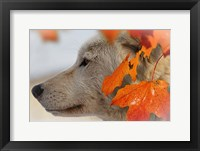 Framed Wolf Profile Autumn Leaves