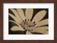 Framed White And Black Flower