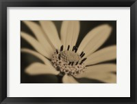 Framed White And Black Flower