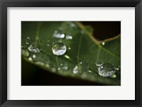 Drops Of Rain On Leaf Closeup I Framed Print