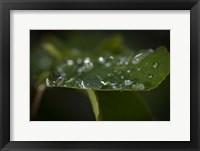 Drops Of Rain On Leaf Closeup II Framed Print