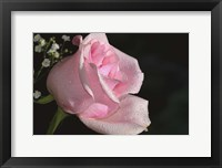 Framed Rose Pink