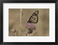 Framed Black And White Butterfly On Flower
