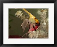 Framed Angel Fish XIV