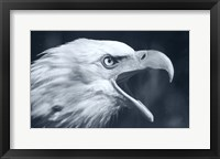 Framed Bald Eagle 4