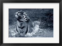 Framed Tiger Splash