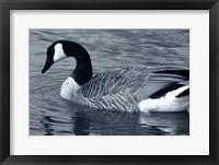Framed S Goose