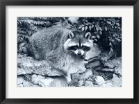 Framed Raccoon 2