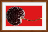 Framed Cherry Covered In Water Drops I