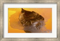 Framed Floating Fall Leaf II