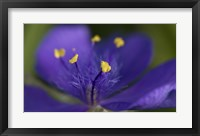 Framed Purple And Yellow Flower Closeup
