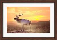 Framed Elk Sunrise In The Badlands