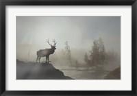 Framed Yellowstone Elk
