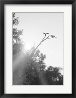 Framed Flying Bird Silhouettes On Branches