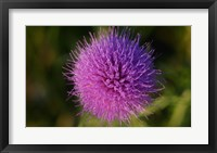 Shades Of Nature Purple Spiked Flower I Framed Print