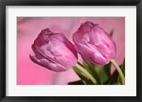 Framed Pink Tulip Duo