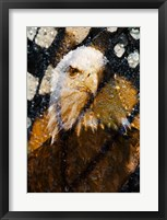 Framed American Bald Eagle I
