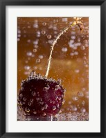 Framed Cherry Underwater Covered In Water Drops I