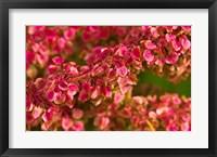 Framed Pink Leaves Clustered On Branch