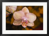 Framed Pink Spotted Flower On Stem