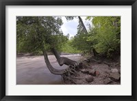 Framed North Shore Trees
