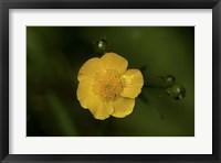 Framed North Shore Yellow Flower