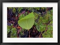 Framed North Shore Curled Leaf