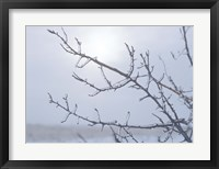 Blue Sky And Frosted Branch I Framed Print