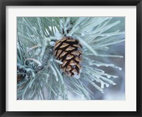 Framed Frosted Pine Cone And Pine Needles I