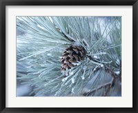 Framed Frosted Pine Cone And Pine Needles III
