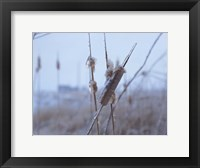 Framed Frosted Cattails I