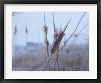 Frosted Cattails I Framed Print