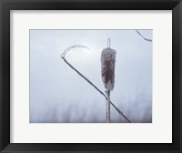 Framed Frosted Cattails II